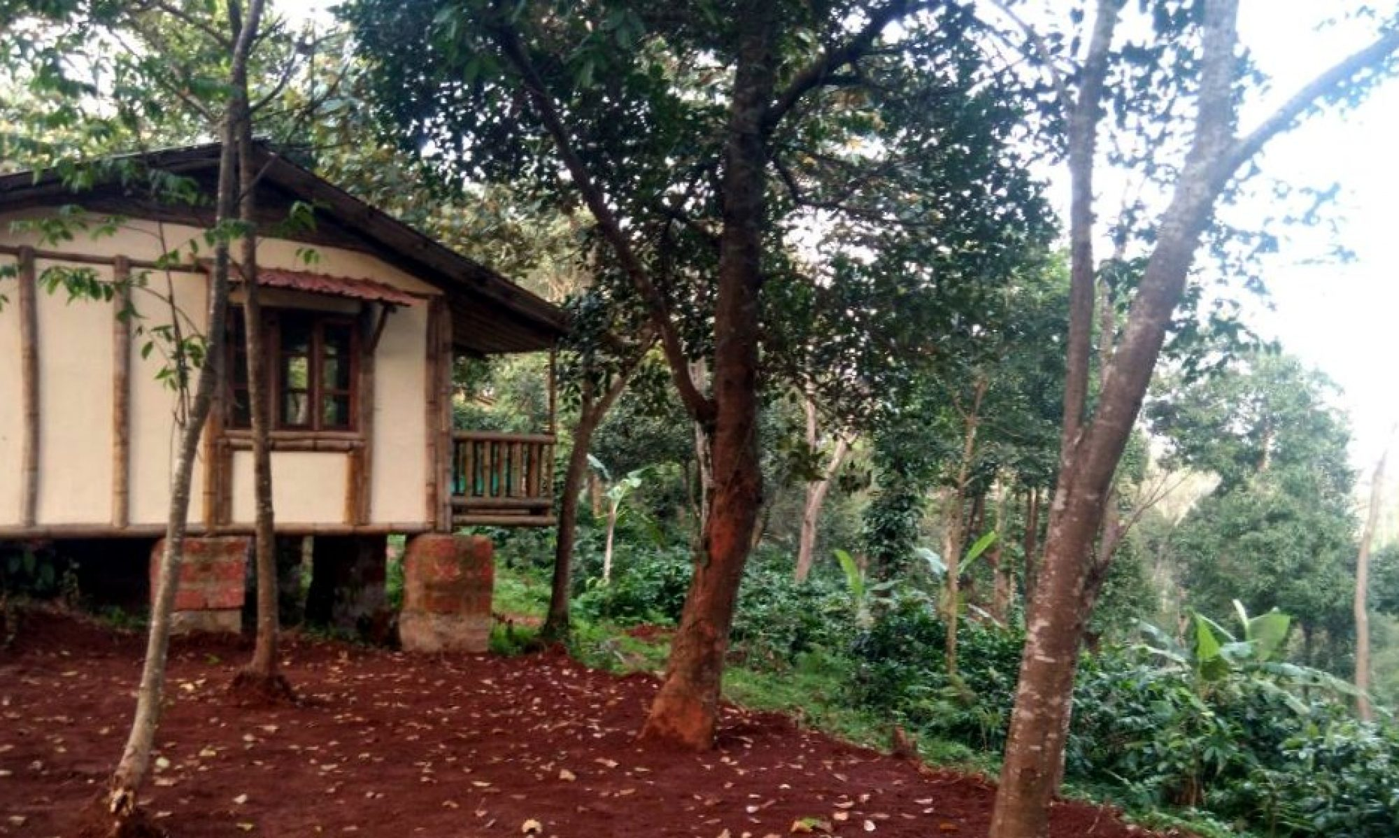 30 acres atop a hill at Sakleshpur